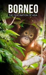 Borneo The Fascination of Asia (2017) [2160p] [BluRay.x264.8bit.SDR.DTS-HD.MA.5.1-SWTYBLZ] [ENG]